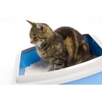Kattenbakken & Vulling