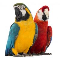 Tropische Vogel