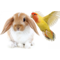 Knaagdier & Vogel