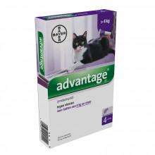 Bayer Advantage kat 80